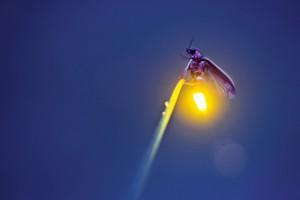 firefly_71578